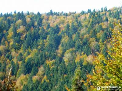 Selva Irati-Pirineo Navarro-Puente del Pilar; patones torrelaguna botas de montaña barranquismo